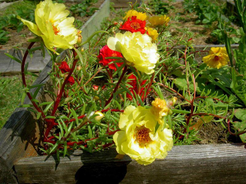 полуденный жар цветы фото услуги свадебного фотографа