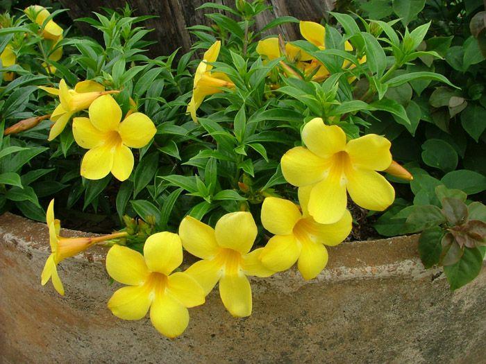 η χρυσή του λουλούβιλ μαύρο δωρεάν online ιστοσελίδες dating