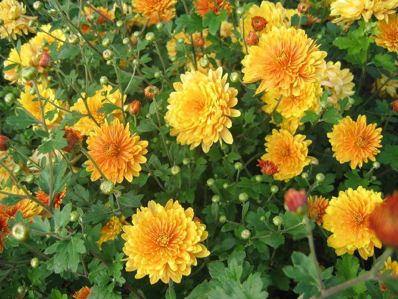 Названия комнатных цветов, каталог комнатных цветов 89
