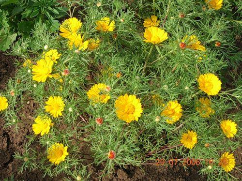 Цветы желтого цвета. Названия и описание растений