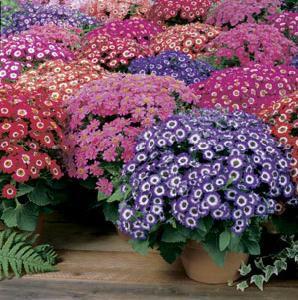 Каталог садовых многолетних цветов для дачи с фото