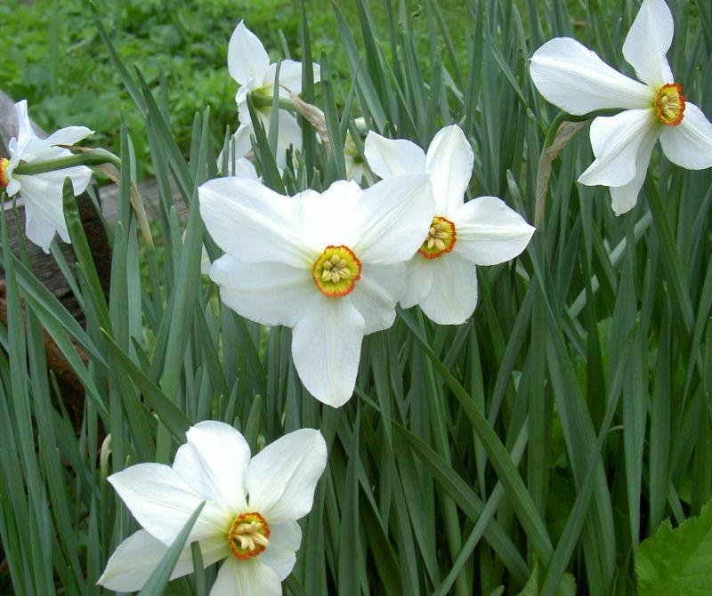 Цветы на н