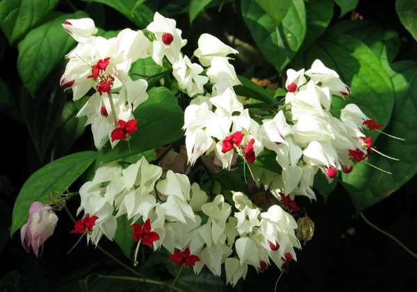домашние цветы в картинках: