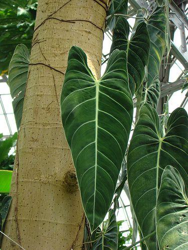 Комнатные растения в картинках с